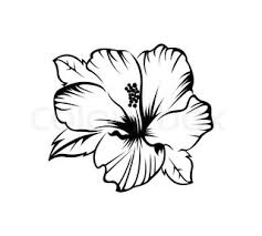 hibiscus black and white sketch drawing a houseplant stock