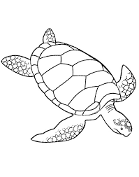 print turtles coloring pages for adults