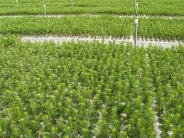tree seedling supply remains uncertain treetopics