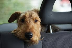 California Wildfires Pets by California Law Allows People To Save Dogs From Car Death