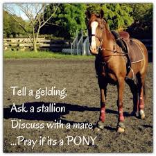 Horse Riding Meme - best of funny horse riding memes daily funny memes