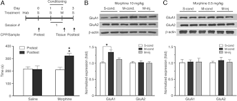 central amygdala glua1 facilitates associative learning of opioid