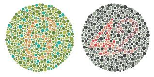 Colors That Color Blind Can See Nikon Lenswear India