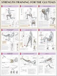 strength training for glutes chart find us on www facebook