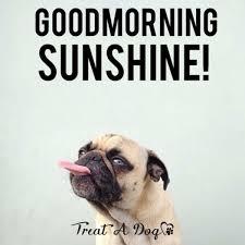 Good Morning Sunshine Meme - good morning sunshine meme for him and her ilove messages