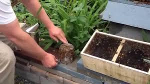 backyard beekeeping in the city youtube