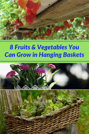 Gardening Basket Gift Ideas by 8 Fruits U0026 Vegetables You Can Grow In Hanging Baskets Home And