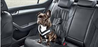 protection siege auto chien transporter chien en voiture les 8 accessoires immanquables