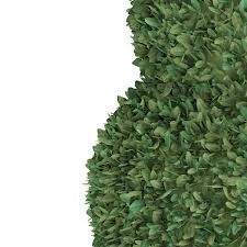 3d boxwood plant buxus sempervirens cgtrader