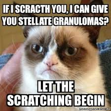 Usmle Meme - my notes for usmle your grumpy cat meme is so hilarious it