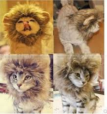 Kitten Halloween Costumes Pet Cute Pet Accessories Pet Costume Lion Mane Wig Dog Cat