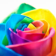 Roses For Sale Buy Rainbow Roses Free Uk Delivery Iflowergift Com