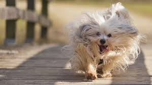 dog wallpapers dog wallpapers hd puppy wallpaper free dog wallpapers