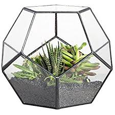 hanging wall mount hexagonal prism glass geometric terrarium