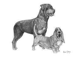 coloring amusing rottweiler drawings mollylamb rottie