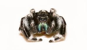 Are Spiders Attracted To Light Spiders 101 Types Of Spiders U0026 Spider Identification