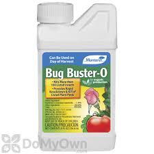 box elder bugs how to control kill u0026 get rid of boxelder bugs