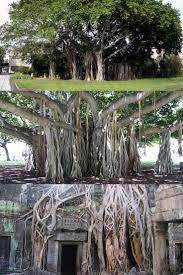 25 best wiki tree ideas on pinterest tree house designs