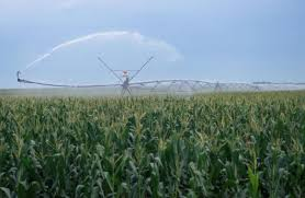 irrigated corn how much irrigation is needed on corn in the vegetative growth stage