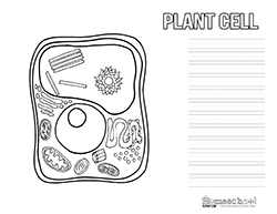 plant cell clipart