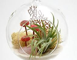 bliss gardens air plant terrarium with 4