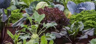 learning from your vegetable gardening mistakes
