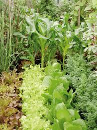 vegetable garden plans diy