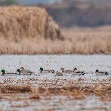 mackspw black friday waterfowl gear mack u0027s prairie wings