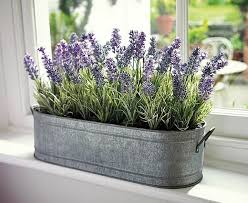 fragrant indoor plants 3 scented indoor plants that give your home a great fragrance