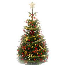 needles plus festive decorated tree pines