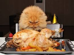 cat ready to eat turkey thanksgiving