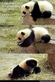 Funny Panda Memes - funny panda 1363821302 jpg