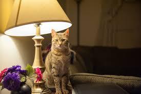 Katze Schlafzimmer Ja Bett Nein Smart Animals Seite 5 Von 15 Glückliche Tiere Sind Schlaue Tiere