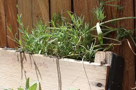 Diy Vertical Herb Garden Diy Inspiration The Vertical Herb Garden U2013 To The Bones