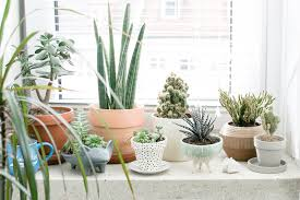 winter decorating ideas decorating with house plants how to