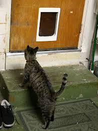 Exterior Cat Door Homeofficedecoration Exterior Cat Door