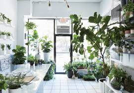 best 26 awesome images interior design plants abogadoriverside the store thats changing how city dwellers buy plants dwell home office decorating ideas
