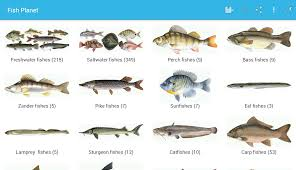 fish planet android apps on google play