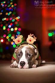 best 25 pet photography ideas on pinterest dog photography dog