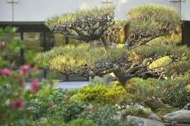 james irvine japanese garden u2014 japanese american cultural