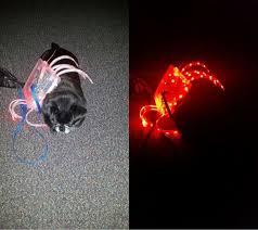 Dog Spider Halloween Costume Led Spider Decoration Dog Costume 16 Steps Pictures