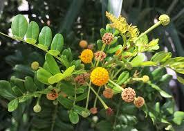 south florida native plants go native u2013 citizens for a better south florida