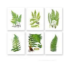 Fern N Decor Amazon Com Fern Botanical Wall Art Unframed Set Of 6 Home Decor