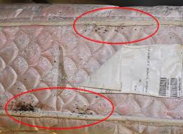 Can Bed Bugs Live In Water Bed Bugs Informational Guide To Bed Bugs Purdue Monitoring