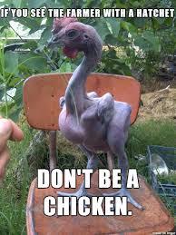 Rooster Meme - scrotasaurus bagus advice rooster meme on imgur
