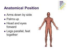 Human Anatomy Terminology Anatomical Terminology Ppt Video Online Download
