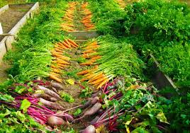 6 ways to increase food production in your organic vegetable