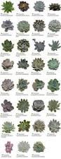 best 25 cactus names ideas on pinterest names of succulents