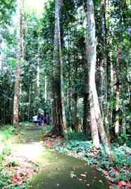 Up Los Banos Botanical Garden by 29 Best Philippines Images On Pinterest Philippines Beautiful