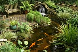 backyard tropical garden house design with diy koi fish ponds and